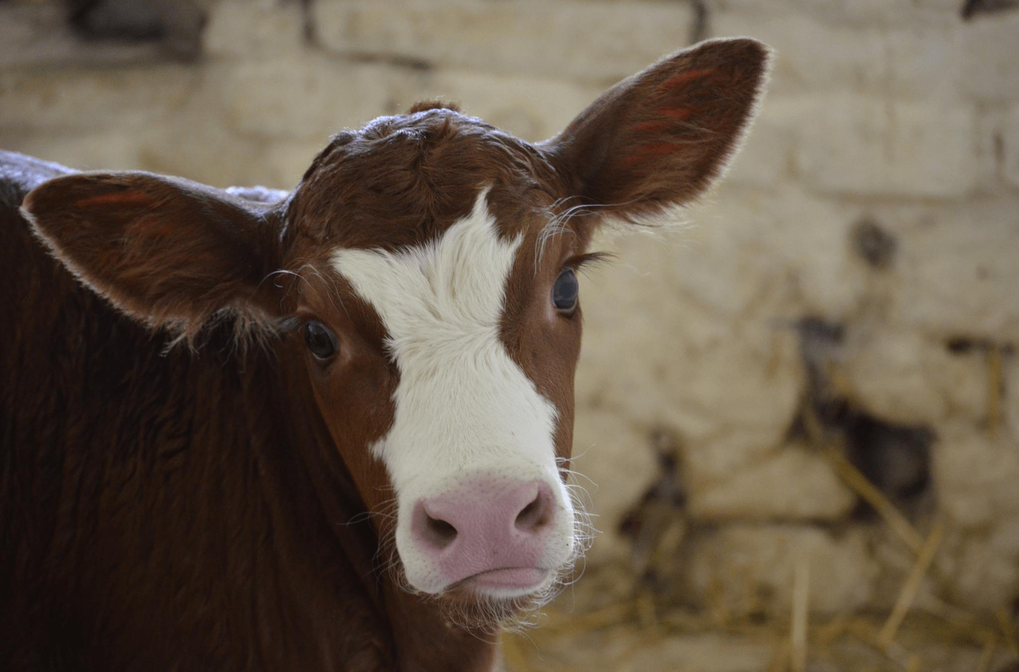 10 redenen geen vlees